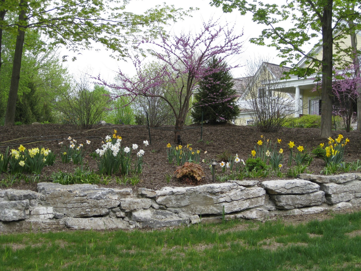 Woodland understory garden design latham ny landscaping and landscape design albany ny for Spring garden troy ny
