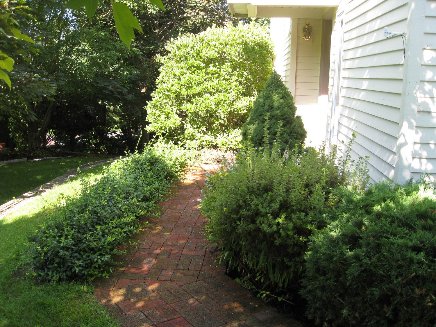 Small space landscape designs landscaping and landscape for Easy care shrubs front house