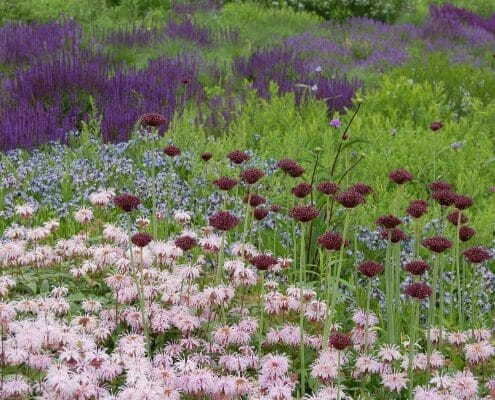 native perennial plant community design approach