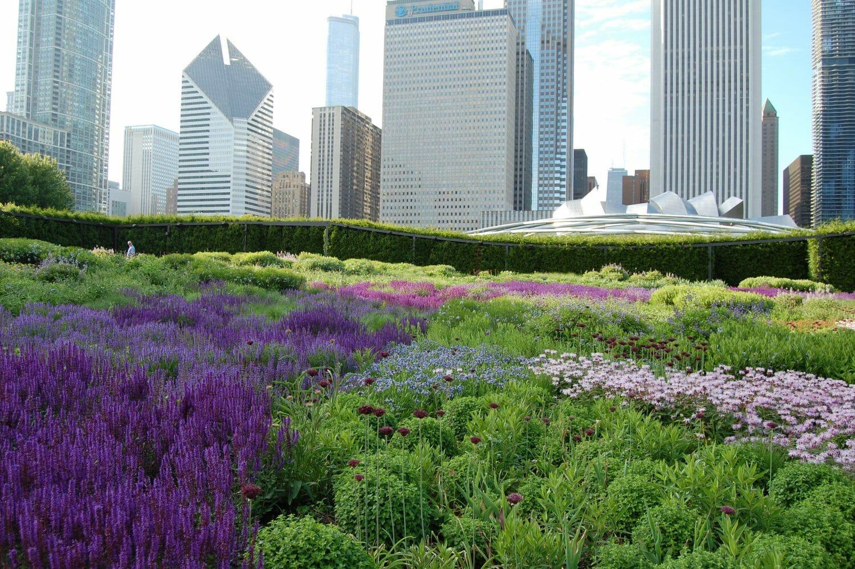Garden Design Questionnaire landscape design and consulting - landscaping and landscape design